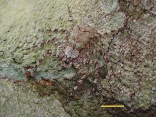 Aerial Arachnids: Jungle Spiders Glide Between Trees