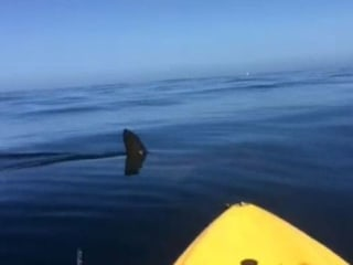 Kayakers Capture Close Encounter With Hammerhead Shark