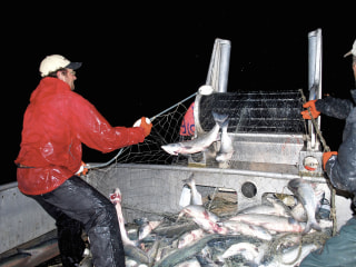 Battle Over Alaska's Bristol Bay Pits Salmon Against Gold