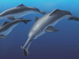 Scientists Discover New Species of Ancient River Dolphin