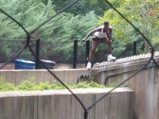 Man Attempts to Enter Lion's Den at National Zoo