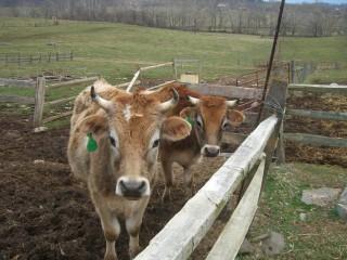 Feeding Antibiotics to Farm Animals May Worsen Climate Change