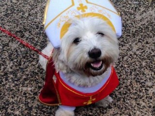 #PopeDog pet pictures are trending, and they're heavenly!