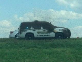 Swarming Honeybees Trap Deputy on Oklahoma Interstate