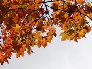 Autumn Leaves: Website Will Ship You New England's Finest for $19.99