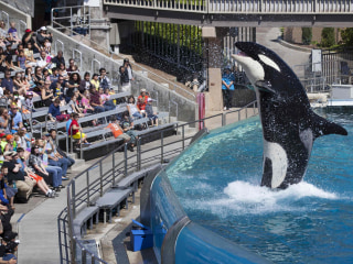 Future Unclear for SeaWorld After Ban on Orca Breeding