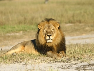 Man Steals, Crashes Boat of Hunter Who Killed Cecil the Lion