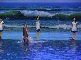 REPORTER'S NOTEBOOK: What North Korea's Dolphins Say About the Country