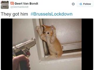 #BrusselsLockdown Cat Tweets Go Viral During Terrorism Raids