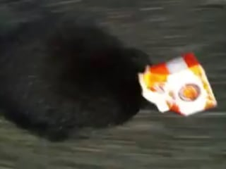 Police Officer Saves Skunk Stuck in Orange Juice Carton