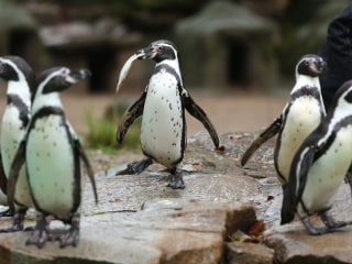 Penguin's Death Is Latest Unsolved Mystery to Hit Dortmund Zoo