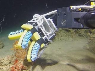 'Squishy Robot Fingers' Tenderly Sample Fragile Marine Lifeforms