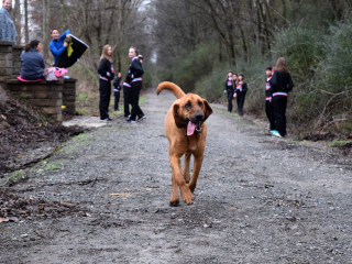 'Lazy' Dog Crashes Half Marathon, Finishes Seventh