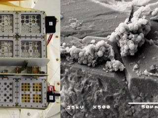 Antarctic Fungi Survive for a Year in Mars-Like Conditions on Space Station
