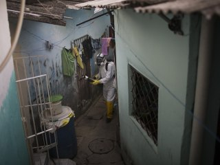 'Lazy' Mosquitoes Spread Chikungunya, Other Viruses, to Women