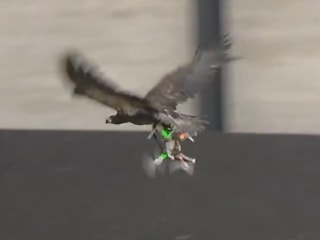 Dutch Police Are Training Eagles to Take Down Rogue Drones