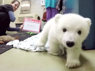 The Columbus Zoo's Adorable Polar Bear Cub Now Has a Fitting Name