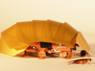 To the Rescue: Cockroach-like Robots May Help in Disasters