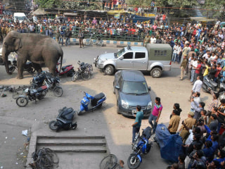 Lost Elephant Runs Amok in Indian Town