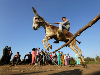 Meet Ahmed and his Jumping Donkey
