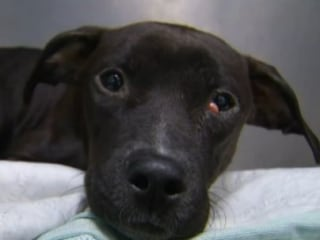 Abandoned Dog Found With Paws Frozen to Ground in Park