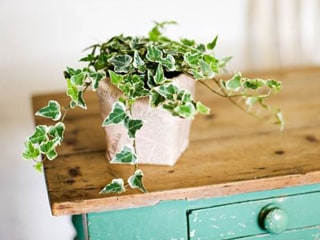 These are the 15 easiest indoor houseplants (that won't die on you)