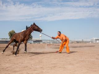 Inmates Train Wild Horses for Border Patrol