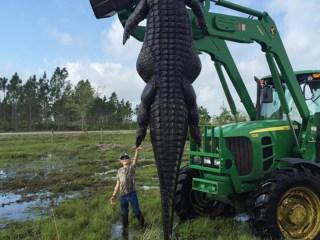 Hunters Nab Monster Alligator in Central Florida