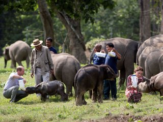 Will and Kate Feed Rhinos, Elephants on Indian Safari