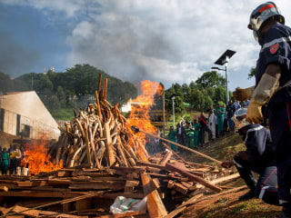 Massive Ivory Burn in Cameroon Sends Message to Poachers