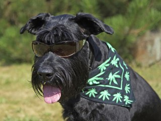 Bud for Buddy: These People Are Giving Marijuana to Their Pets