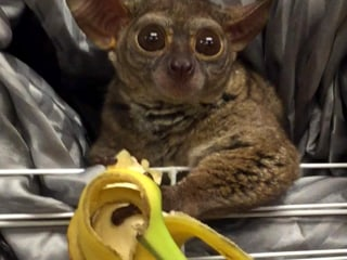 Oregon Man Tipped Prostitute With Primate Stolen From Pet Store: Police