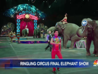 The Ringling Brothers Elephants Are Taking Their Final Bow