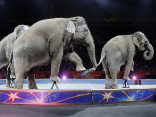 Elephants Perform at Ringling Bros. Circus for Last Time