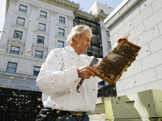 San Francisco Hotels Build Buzz With Rooftop Beehives
