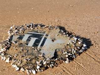 Likely MH370 Piece Was Left on South African Beach Due to Smell