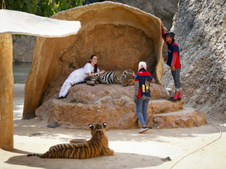 An Inside Look at Controversial Thai 'Tiger Temple'