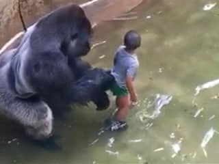 'I Can't Watch': Mom's Frantic Call to 911 After Son Falls Into Gorilla Exhibit