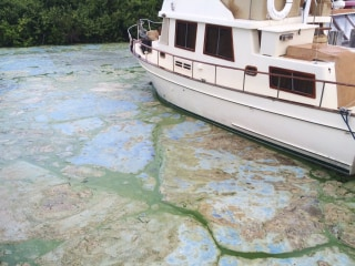 Florida Tourism Not Seeing Green as Toxic Algae Chokes Business
