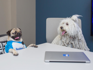 Social Media Users Post About Their Dogs Six Times Per Week
