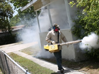 New Zika Outbreak Found in Florida's St. Petersburg