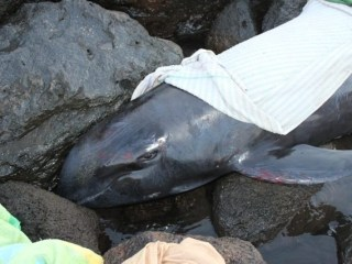 Native Hawaiians Face Federal Charges for Sea Burial of Whale