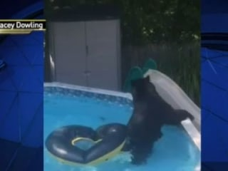 Family Finds Bear Cooling in Pool: 'He Popped Our Float!'