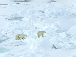 Russian Meteorologists Are Trapped By Polar Bears 2,800 Miles From Moscow