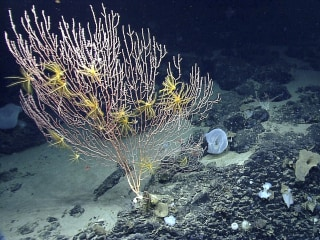 Obama to Create First Marine National Monument in the Atlantic
