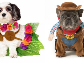 32 cute, easy Halloween costume ideas for dogs