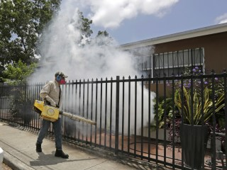 Another Miami Neighborhood Is Cleared of Zika Virus