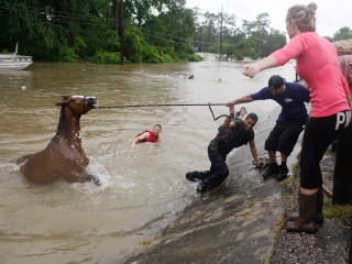 Firefighters Rescue 700-Pound Horse Trapped in Pool