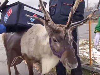 Domino's Tried a Reindeer Delivery Program... You Can Guess How That Went