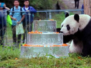 Pan Pan, World's Oldest Male Panda, Dies in China